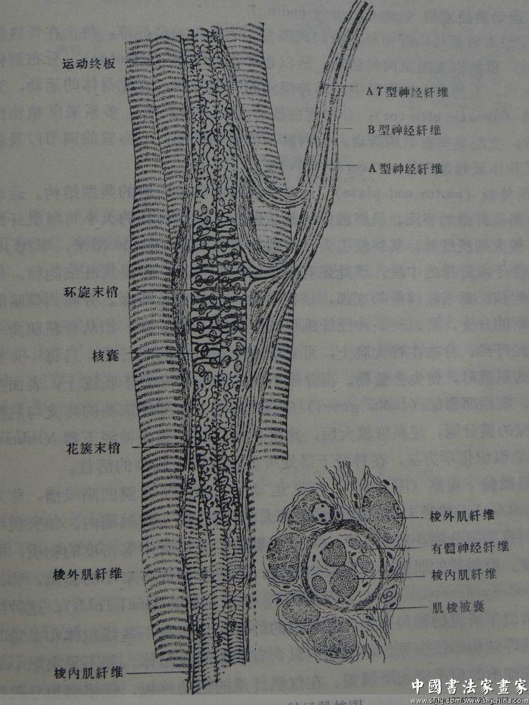 陈伟生教授与人体解剖结构