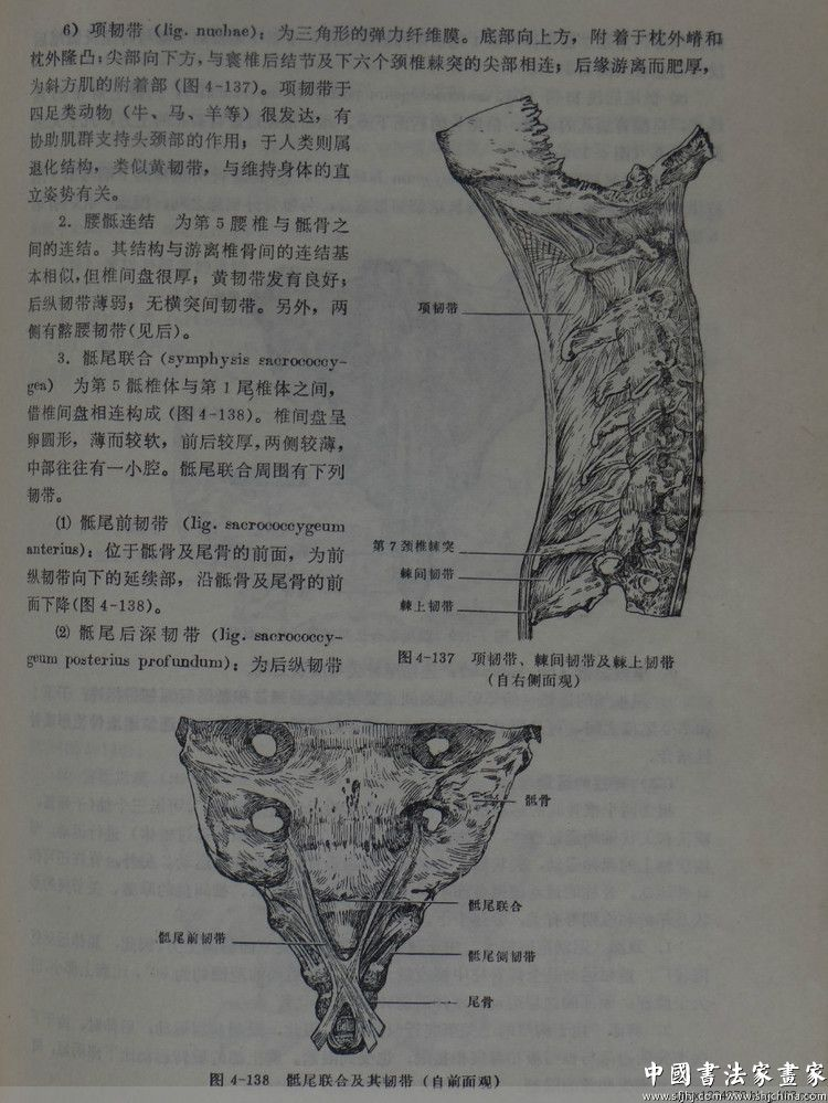 还有各个解剖部位的局部各个角度图像
